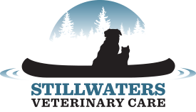 Stillwaters Veterinary Care | Central New York